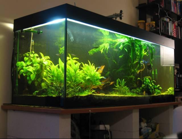600l aquarium in m nchen abzugeben for Aquarium 600l